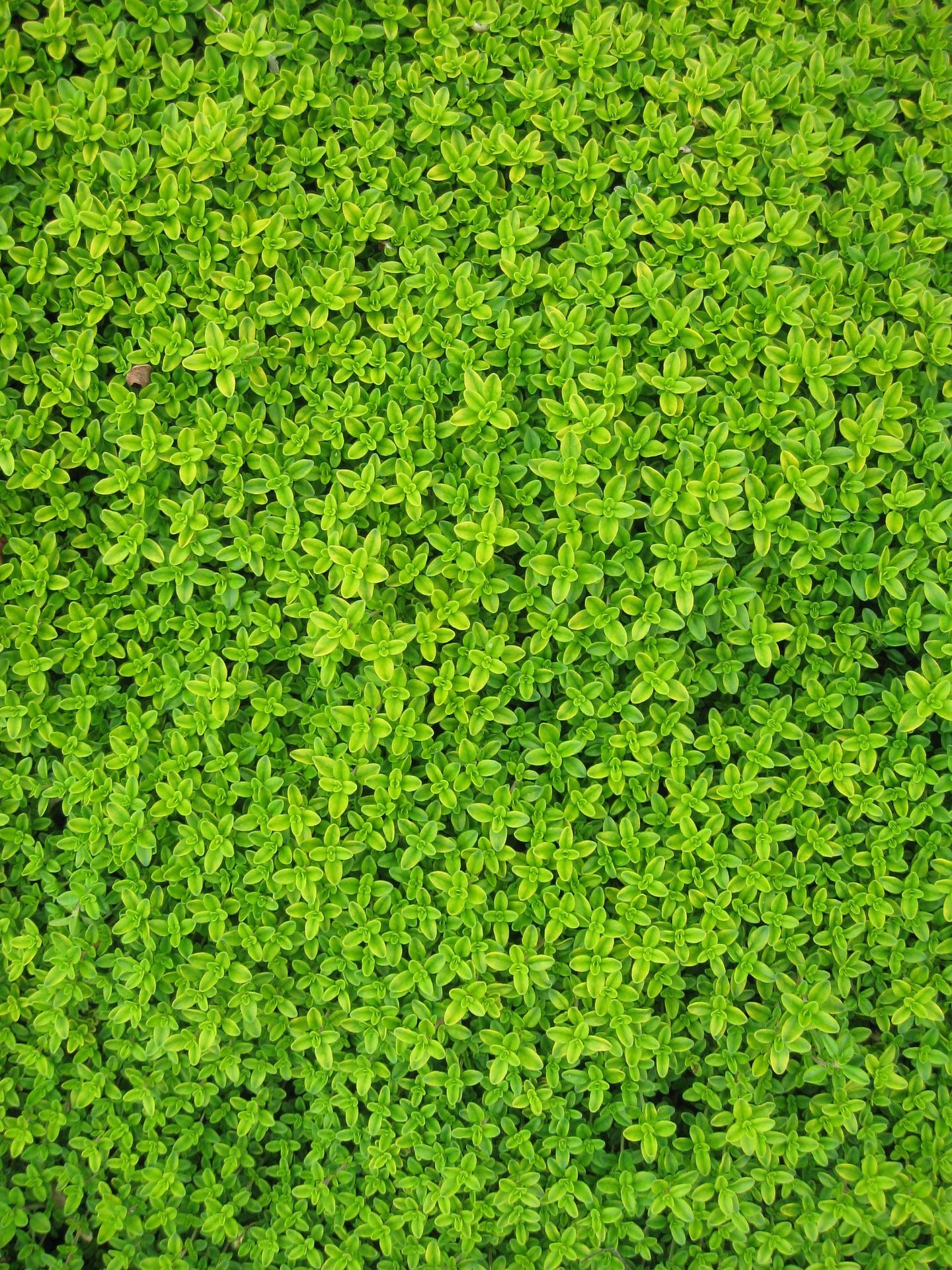 Mur Végétal Extérieur Palette mur végétal : comment faire soi-même ? - la maison vivante